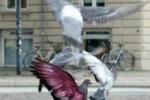 Piccioni colorati, esposto animalista contro un artista