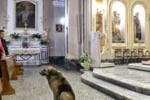 Muore la padrona, il cane Tommy ogni giorno in chiesa