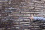 Roma, graffito davanti al muro del Colosseo: le foto
