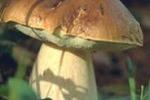 Seminario sui funghi ad Enna