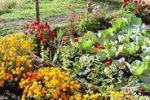 Come coltivare l'orto, corsi per bambini ad Enna