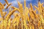 Sagra del grano, tutto pronto a Catenanuova