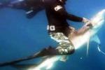 Pelagic Life, un progetto per salvare gli squali