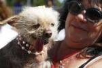 Il cane più brutto? Al via un concorso in California