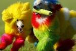 Esplode in California la moda dei cani colorati
