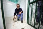 Palermo, sterilizzazioni gratuite per randagi adottati in canile