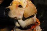 Nepal, il Culto del Cane al Thiar Festival