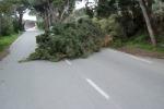 Maltempo e vento, a Caltanissetta alberi caduti e pali pericolanti