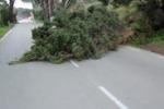 Messina, alberi caduti per il vento: disagi lungo la statale