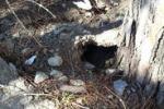 Messina, nei quartieri popolari è emergenza topi