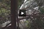 Tgs. Ritrovato a Messina il cadavere di una ragazza scomparsa