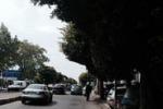 Messina, invaso dagli alberi viale della Libertà