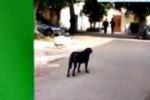 Canile municipale di Palermo, bando bloccato