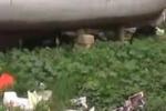 Spazio abbandonato a Palermo: le immagini
