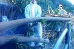 Scirocco a Trabia, albero abbattuto sulla statale