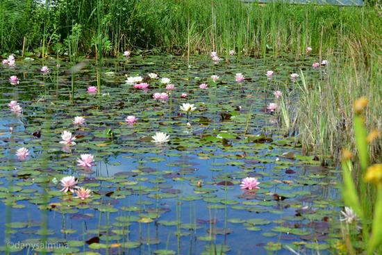 Montemaggiore belsito alla scoperta del lago bomes for Animali per laghetto