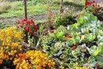 Come creare un orto urbano, lezione a Ragusa