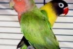Mostra Ornitologica Nazionale a Ragusa