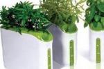 Piante ed erbe officinali, percorsi olfattivi a Scicli