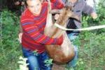 Ragusa, daino ferito salvato vicino alla diga Santa Rosalia