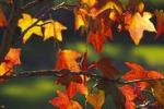 """Festa d'autunno"", tutto pronto a Siracusa"