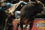 Il rodeo da' spettacolo a New York