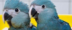 Noto, taglia le piume a due pappagallini per fare foto con i turisti: 15enne denunciato