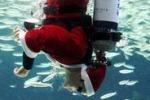 Acquario della Corea del Sud: ecco Babbo Natale subacqueo
