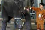 Zampa artificiale per un elefante: era stato colpito da una mina
