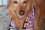 Tommy, il cane tifoso del Palermo