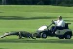 Golf, in Lousiana l'invasione di campo di un alligatore