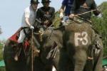 In Thailandia il torneo di Polo si gioca con gli elefanti