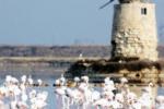 Saline di Trapani, i fenicotteri rosa per l'Eurobirdwatch