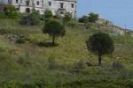 Santa Ninfa, mostra al Castello di Rampinzeri