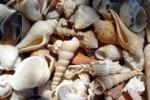 Oltre 300 conchiglie in mostra a Trapani