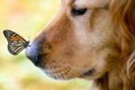 A Marsala c'è la benedizione degli animali
