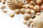 Trapani, più di 300 conchiglie in mostra