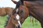 Per gli amanti dei cavalli, equiraduno a San Vito Lo Capo