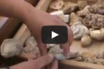 "Nasce ""Fossilandia"", un punto geologico ad Alcamo Marina"
