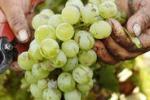 Vini, degustazione al Castello di Pantelleria