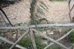 Da Tgs: degrado nella riserva di Barcarello