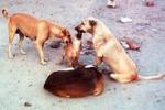 Cani avvelenati ad Agrigento. Il servizio di Tgs