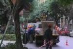 Rami invadenti, a Palermo un piano per potarli
