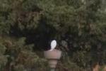 Da Tgs: lampioni vecchi, Giardino Inglese al buio