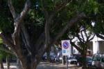 Palermo, 48 mila alberi da potare. Il servizio di Tgs