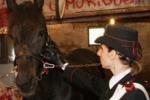 Corse clandestine di cavalli: blitz a Palermo