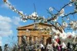 Da Tgs: presentata la Sagra del Mandorlo in fiore