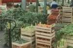 Accordo sui prodotti agricoli dal Marocco: polemica
