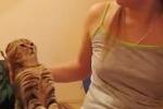 Youtube, tutti pazzi per il gatto che vuole le coccole