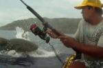 Hawaii, scontro in mare tra un pescatore e uno squalo